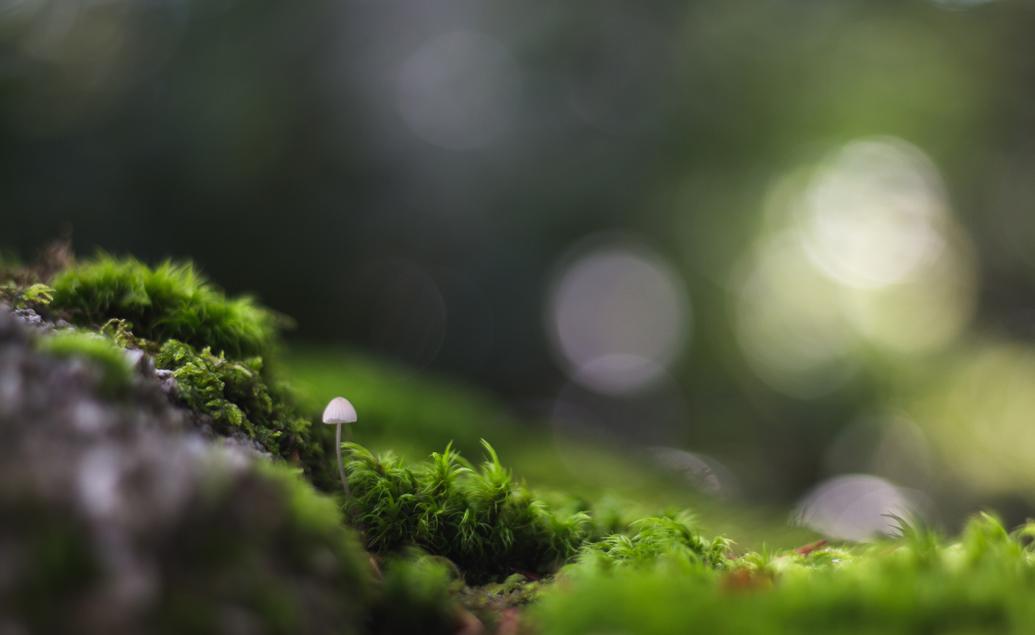 Giv naturen en stemme